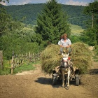 Horse-cart with Hay, Transylvania
